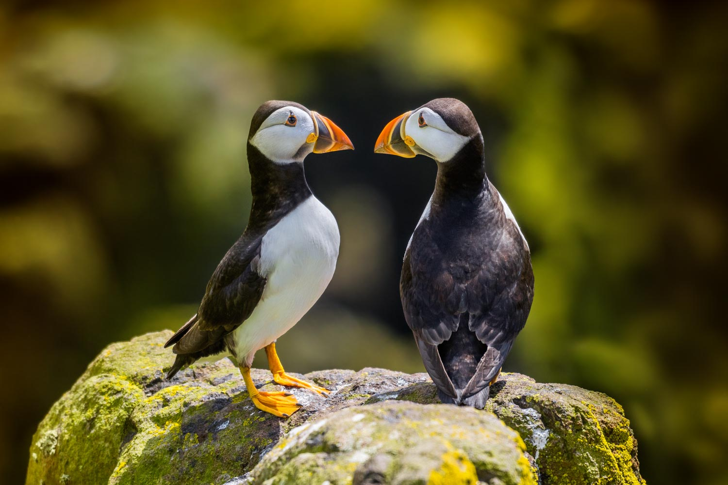 Graphic Design & Commercial Photography Puffin Relationship Photo
